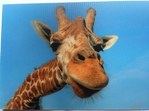 3D Postkarte Wackelbild Giraffe