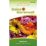 Gerbera Single Mix   Blumensamen   Gerberasamen   Saatgut für einfach blühende Mischung