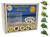 Grow Your Own Taste of The Sun Eco Gift Set | Mediterranean Herbs Plant Kit | 6 x Herb Seeds Plus Everything Needed to Sow Your Indoor Kitchen Garden | Plastic Free Fun Gardening Present