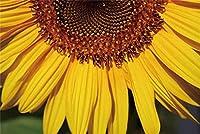 新しいひまわりの背景7x5ft鮮やかなひまわりの花びら写真の背景春の写真ガーデンパーティー結婚式の写真ブースの背景子供大人芸術的な肖像画デジタル壁紙