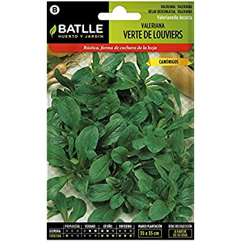 Semillas Aromáticas - Valeriana Verte de Louviers - Batlle: Amazon ...