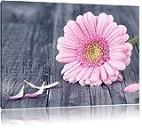 Pixxprint Pinke Gerbera auf rustikalem Boden / 100x70cm
