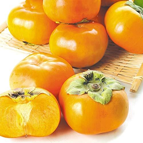 国華園 愛知・三重産 次郎柿 約10kg 1箱