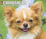 Just Chihuahuas 2020 Calendar