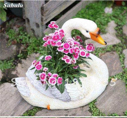 Inde importation Œillets Seed Dianthus caryophyllus Embellir et de purification d'air bricolage jardin Plantation maman cadeau 120 Pcs 9