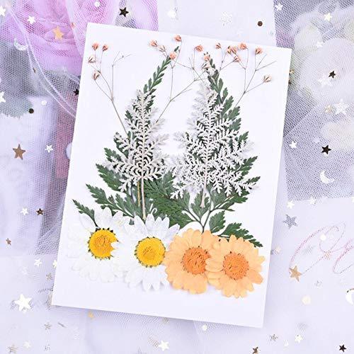 Manyao Gepresste Blumen DIY konservierte Blume Epoxy Telefon Schale trocken Blume Material Geprägte Gesicht Blütenblatt Make-up kleine Trockenblumen (Color : Style N)