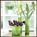 Bulbos de Tulipán Mixtos,Tulipan Bulbo,Hermosas Flores,Plantas De Jardín De Primavera,Olor Raro,Colorido, Muy Buen Crecimiento,Flores Exóticas-5 Bulbos,1
