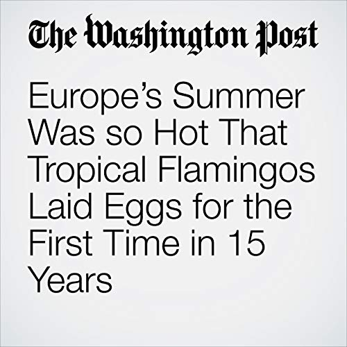 Europe's Summer Was so Hot That Tropical Flamingos Laid Eggs for the First Time in 15 Years copertina