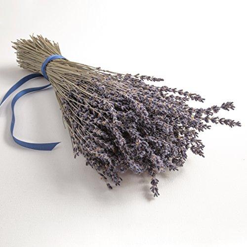 ROSEMARIE SCHULZ Heidelberg Bund Lavendel getrocknet ca. 300 Stengel Lavendelblüten aus der Provence Lavendelstrauß Lavendelbund Trockenblumen Raumduft Deko
