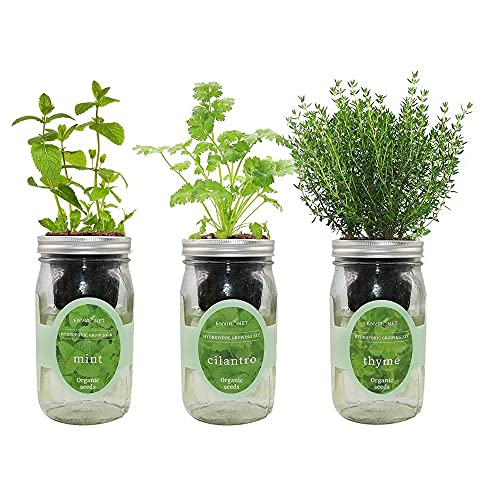Environet Hydroponic Growing Kit Set, Self-Watering Mason Jar Herb Garden Starter Kit Indoor, Grow Your Own Herbs From Organic Seeds (Mint, Cilantro And Thyme)