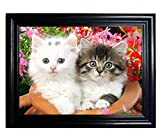 Those Flipping Pictures Kittens Framed Wall Art-Lenticular Technology Causes The Artwork to Flip-Multiple Pictures in ONE-Hologram Type Images Change-Mesmerizing Holographic Optical Illusions