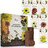Sonnenblumen Anzuchtset mit 6 Sorten und 24 Kokos Quelltabletten zum einfachen Anbau: Sonnenblumen Samen mit torffreier Anzuchterde - Insektenfreundliches Geschenk Anzuchtset mit OwnGrown Blumensamen