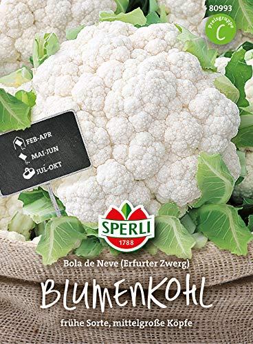 80993 Sperli Premium Blumenkohl Samen Bola de Neve | Frühe Sorte | Mittelgroße Köpfe | Blumenkohl Saatgut | Blumenkohl Samen