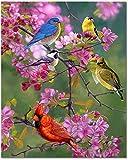 Bougimal Pintar por Numeros Adultos, DIY Pintura por Números Pájaros sin Marco de 40 X 50 cm