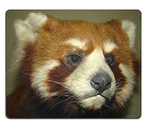 MSD Caucho Natural Alfombrilla para ratón Imagen ID: 3280262Rojo Panda o pequeño Panda Ailurus Fulgens el Pariente de Ahuyentar a Oso no Tienen Actitud