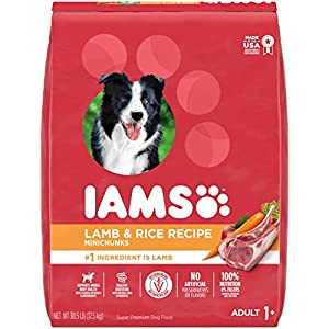 IAMS Minichunks Adult Dry Dog Food Lamb & Rice Recipe Dog Kibble, 38.5 lb. Bag