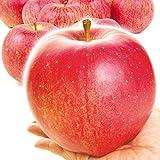 国華園 食品 青森産 世界一 10㎏1箱 りんご