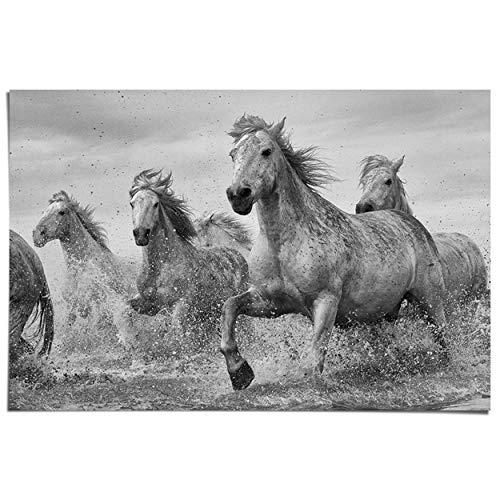 Maxi Poster Paarden van de Camargue - 91 x 61 cm Meisjeskamer