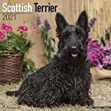 Scottish Terrier Calendar 2021...