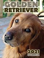 Golden Retriever 2021 Calendar