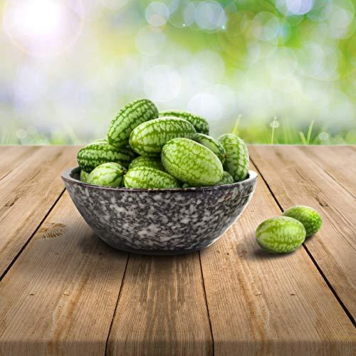 mexikanische Minigurke/Snackgurke/ 25 x Samen, 100% Naturalseeds, ideal für Terrasse, Fensterbank, Containerkultur