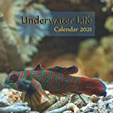 """Underwater Life Clendar 2021: Wall And Desk Calendar 2021, Size 8.5"""" x 17"""" When Open 