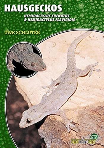 Hausgeckos: Hemidactylus frenatus & Hemidactylus flaviridis (Art für...
