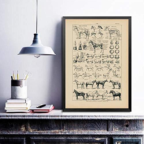 Terilizi Vintage Frans paard anatomie diagram druk biologie muurkunst decor, paard illustratie dier poster canvas schilderij kantoor decor-40X60cm geen lijst
