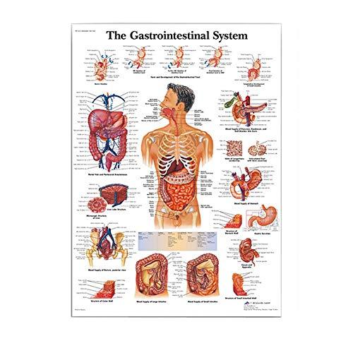 KunLS Poster Anatomia Umana Poster Medicina per Aule, Cliniche, Ospedali, Studi Medici Poster di Anatomia Senza Cornice A,50X70CM No Frame