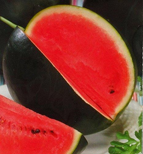 Rare Pastèque Ohonok - Graines Ogoniok Heirloom NON-OGM, l'agriculture biologique