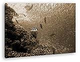 deyoli Peces en bezaubernder bajo Agua Mundo Efecto: Sepia como Lienzo, diseño Enmarcado en Marco de Madera, impresión Digital Marco, no es un póster o Cartel, 80x60