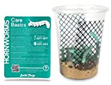 Josh's Frogs Hornworms Habitat Cup (25 Count Cup) Now with FedEx 2 Day