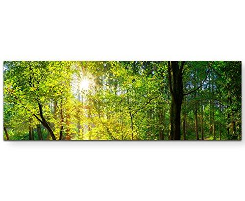 Paul Sinus Art Leinwandbilder   Bilder Leinwand 150x50cm Wald im Sonnenschein