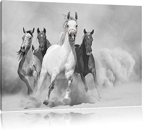 Mustangs gauche dans le désert noir / blanc Taille: 60x40 sur toile, énorme XXL Photos complètement encadrée avec civière, art impression sur murale avec cadre, moins cher que la peinture ou la peinture à l'huile, aucune affiche ou un poster