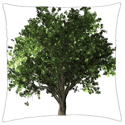 LESGAULEST Throw Pillow Cover (24x24 inch) - Zelkova Serrata Tree Bonsai Zelkova Serrata