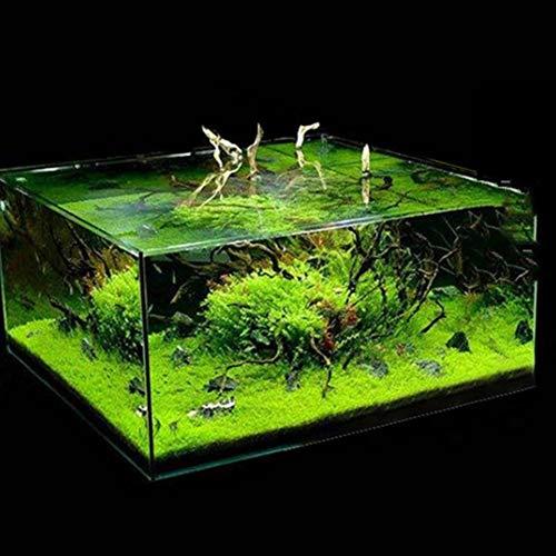 pittospwer 600Pcs Aquarium Erba Samen Fisch Ornament für den Wasserfall 600pcs