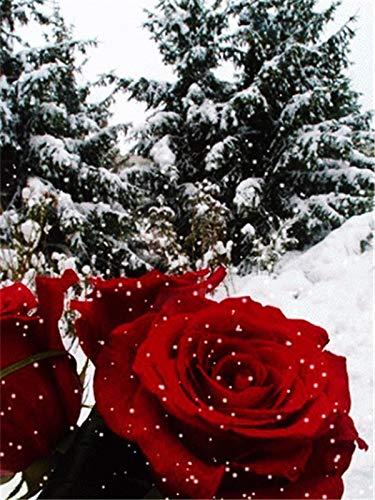 5D DIY diamante pintura conjunto de rosas con incrustaciones de diamantes todo negro y rojo bordado hecho a mano pintura de diamantes A4 60x80cm