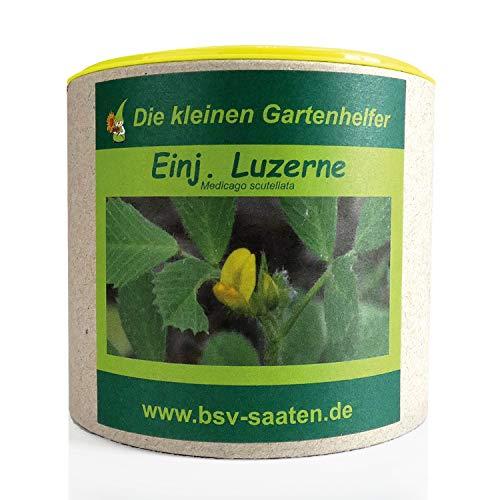Keimsamen Einjährige Luzerne 100g I Samen zur Unkrautunterdrückung I Samen zur Aussaat im Garten I Saatgut Luzernen Samen für 50m²