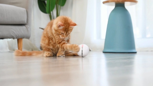 Interactive cat ball
