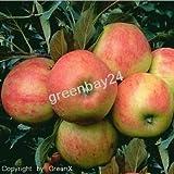 Vom Fachmann veredelte Obstbäume - Obstaum Apfelbaum Elstar Niedrigstamm - 1A Baumschulqualität...