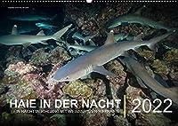 Haie in der Nacht (Wandkalender immerwaehrend DIN A2 quer): Ein Nachttauchgang mit Weissspitzen-Riffhaien (Monatskalender, 14 Seiten )