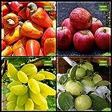 BloomGreen Co. Meilleur prix Combo: fruits, noix de cajou pomme, raisin, géant goyave arbre Graines Cuisine Paquet Jardin