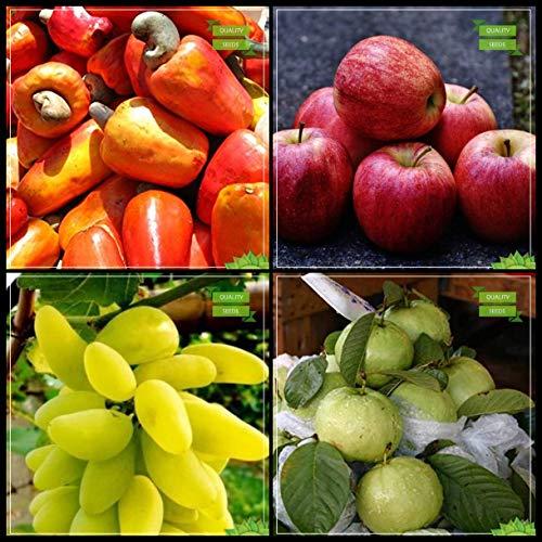 BloomGreen Co. Mejor Precio de conjunto de frutas: anacardo, manzana, uva, guayaba gigante árbol del jardín de cocina Semillas Paquete