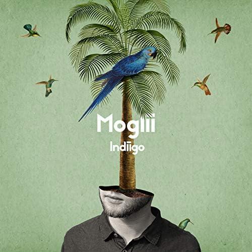 Moglii & Mulay