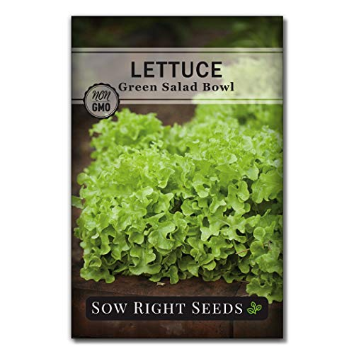 Sow Right Seeds - Green Salad Bowl Lettuce Seed for Planting - Non-GMO Heirloom Packet with Instructions to Plant a Home Vegetable Garden, Indoors or Outdoor; Great Gardening Gift (1)