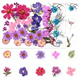 Echte getrocknete violette Blumen, gepresste Blumen, Blätter, Herbarium zum Basteln, für Kerzen,...