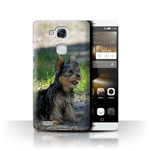 Hülle Für Huawei Ascend Mate7 H&/Eckzahn Rassen Yorkshire Terrier/Yorkie Design Transparent Ultra Dünn Klar Hart Schutz Handyhülle Case
