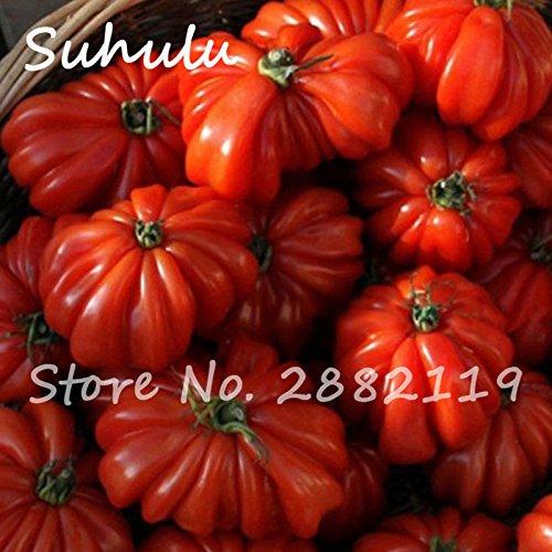100 pcs graines de tomates rouges rares hybrides de boeuf, extra-viande, graines alimentaires biologiques tomates extra-savoureux fruits sucrés et légumes bonsaï 1