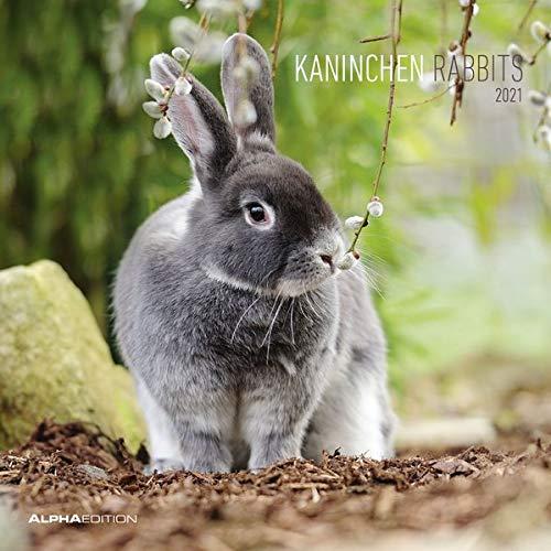 Kaninchen 2021 - Broschürenkalender 30x30 cm (30x60 geöffnet) - Rabbits - Bild-Kalender - Wandplaner - mit Platz für Notizen - Alpha Edition