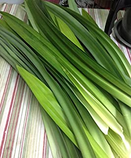 Fresh Pandan Leaves 7 oz. ( Rampe, La Dua, ใบเตยสด )